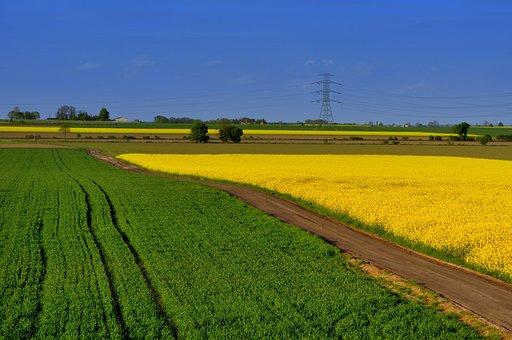 Poland, Landscape, Village, Rzepaki, Spring