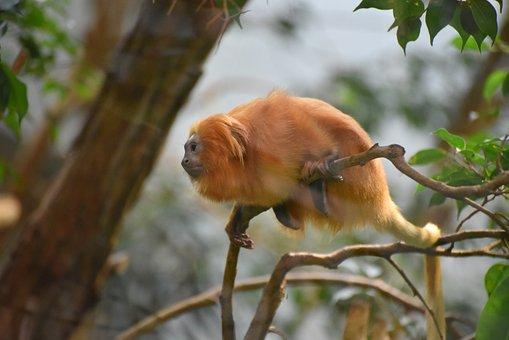 Monkey, Tree, Animal, Nature, Animal World, Mammal