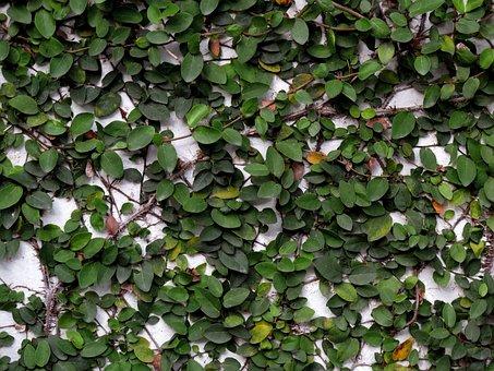 Wall, Tree Climbing, Tree Climbing Wall