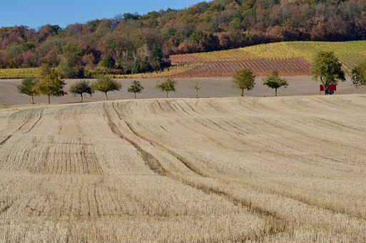 Field, Arable, Agriculture, Avenue, Landscape, Harvest