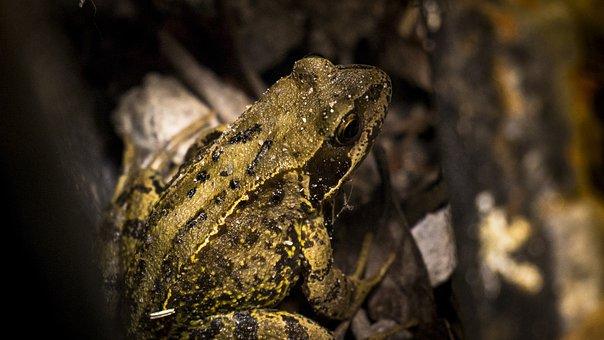 Toad, Wildlife, Frog, Amphibian, Nature, Animal, Wild
