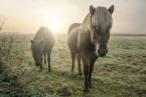 Horses, Field, Animal, Nature, Landscape