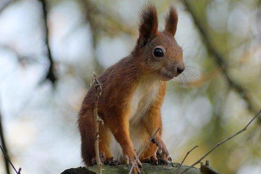 Kraków, The Squirrel, Park, Animals, Nature, Forest