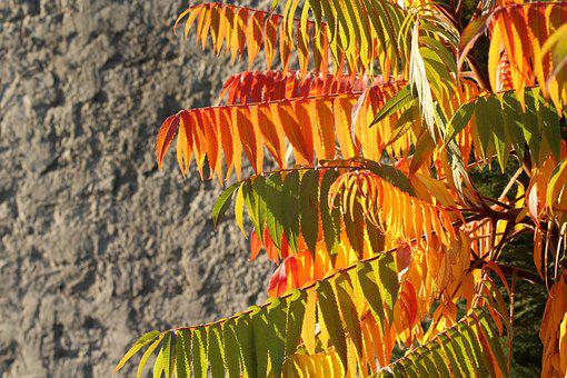 Tree, Foliage, Autumn, Colorful Leaves, In The Fall