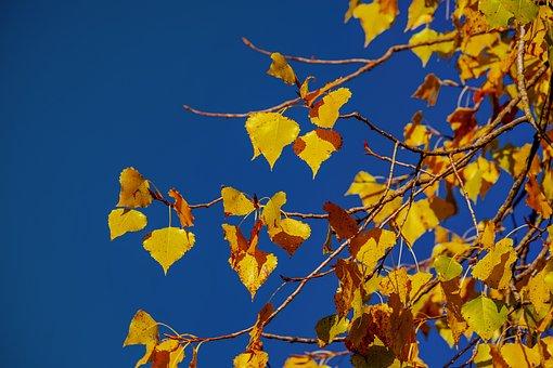 Lipovina, Autumn, Golden October, Linde, Linden