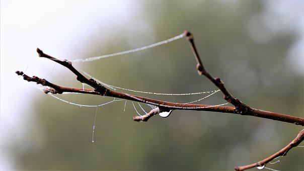 Branch, Spider Net, Water Drops, Hazy, Autumn, Morning