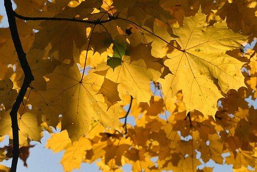Autumn, Kraków, Foliage, Poland, Landscape, Nature