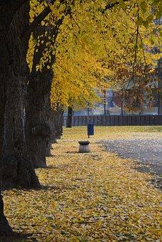 Park, Foliage, Autumn, Nature, Tree, Landscape, Bench