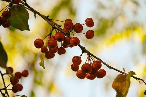 Kindness, Joy, Beauty, Nature, Sun, Sky, Autumn, Berry