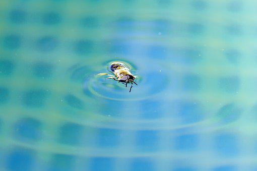 Insect, Water, Swim, Bath, Nature
