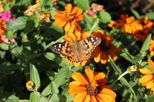 Beautiful Lady, Butterfly, Beautiful, Lady, Beauty