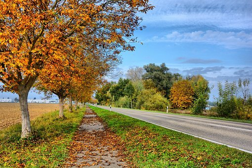 Hagenbach, Autumn, Leave, Leaves, Brown, Nature, Road