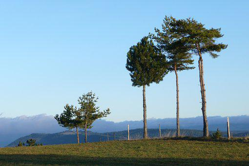 Trees, Wind, Blue, Cold, Tree, Nature, Landscape