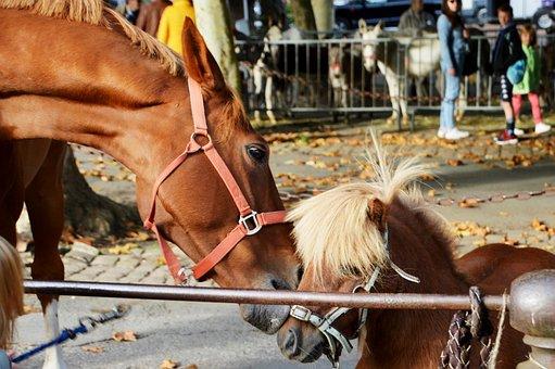 Pony, Animal, Mane, Cute, Mammal, Riding Stable, Show