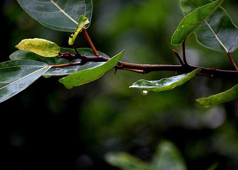 Leaves, Dew, Green, Nature, Water, Wet, Dewdrop, Drip