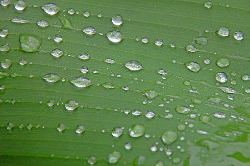 Leaf, Nature, Background, Drip, Drop Of Water, Rain