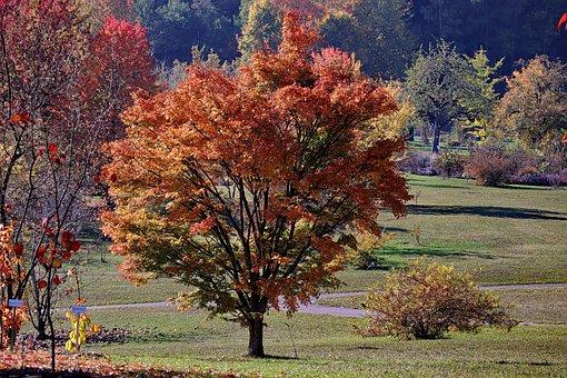 Maple, Autumn, Emerge, Fall Leaves