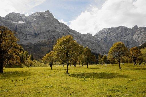 Tyrol, Ahornboden, Trees, Engalm, Karwendel, Landscape