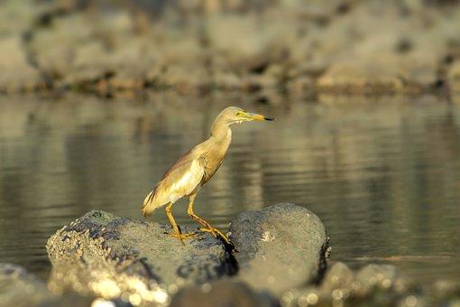 Animal, Bird, Eyes, Button Eyes, Beak, Long, Water