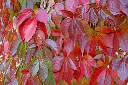 Autumn, Leaves, Nature, Seasons, Fall Foliage