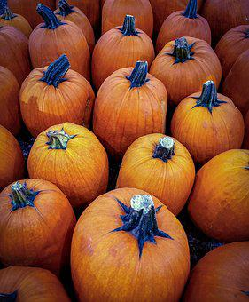 Pumpkins, Harvest, Autumn, Fall, Orange, November, Food