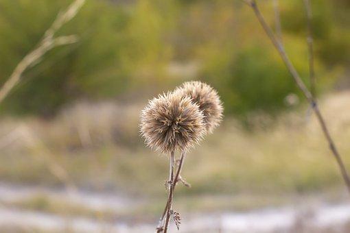 Field, Landscape, Nature, Dry, Grass, Sunrise, Sun