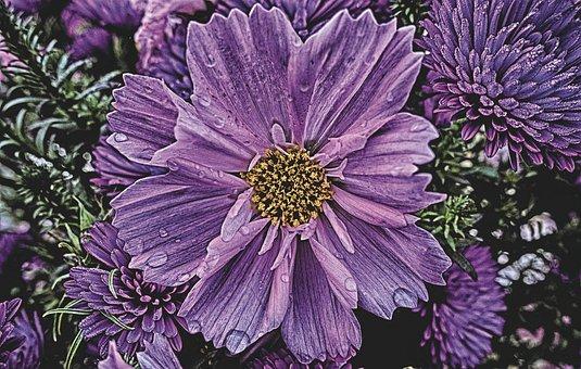 Flower, Garden, Nature, Blossom, Bloom, Plant, Flora