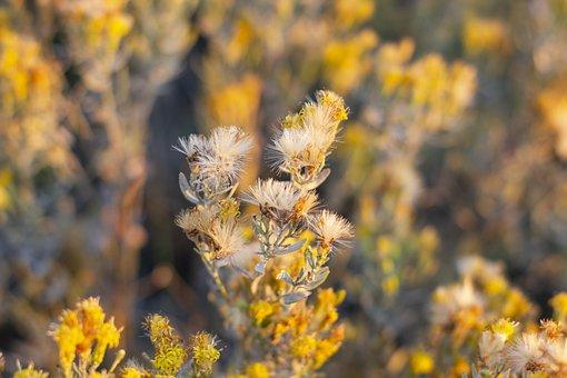 Field, Landscape, Nature, Dry, Grass, Bush, Flower