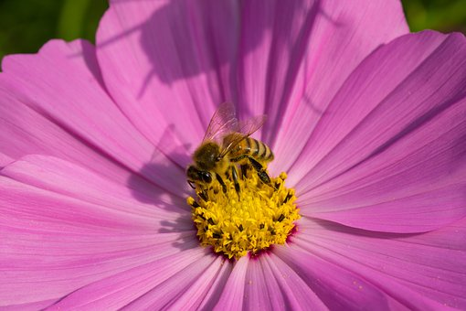 Bee, Flowers, Insects, Macro, Moisture