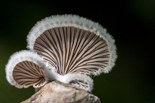 Mushroom, Nature, Forest Floor, Forest Mushroom