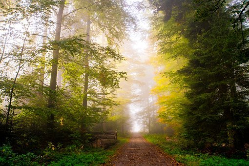 Forest, Autumn, Sunbeam, Nature, Landscape, Trees, Fog