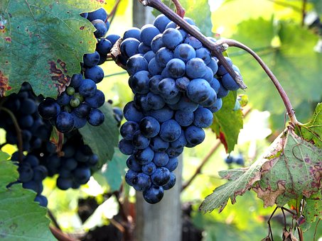 Grapes, Wine Leaf, Vine, Fruit, Wine, Sweet, Ripe