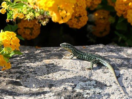 Lizard, Flowers, Green, Rock, Sun