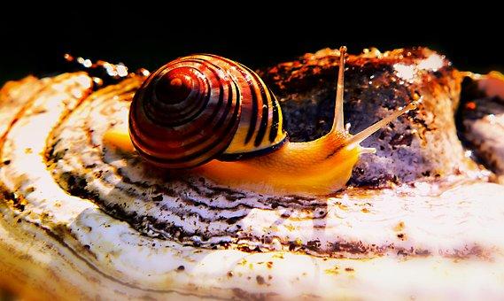 Wstężyk Huntsman, Molluscs, Snail, Mushroom, Hub