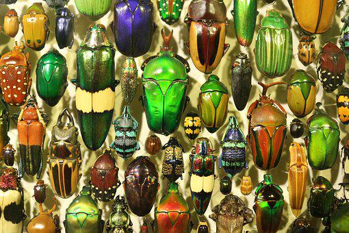 Insect, Insectarium, Insects, Beetle, Beetles, Metal