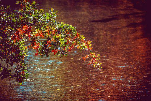 Branch, Fall Foliage, Leaves, Colorful, Autumn, Sun