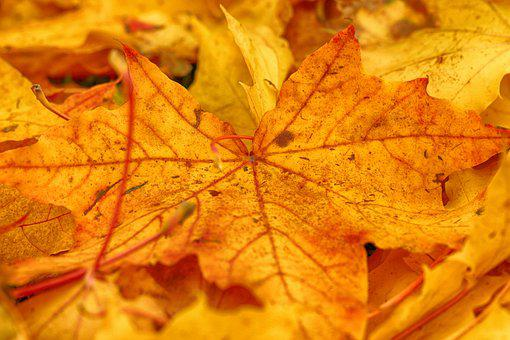 Leaves, Nature, Yellow, Autumn, Fall
