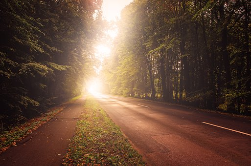 Road, Autumn, Light, Sun, Trees, Forest, Landscape