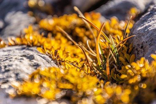 Leaves, Grass, Mountain, Yellow, Macro, Detail