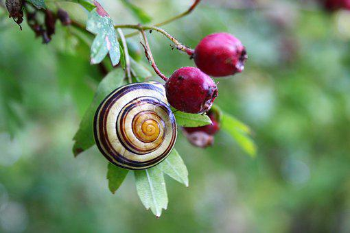 Snail, Mollusk, Shell, Reptile, Slowly, Summer