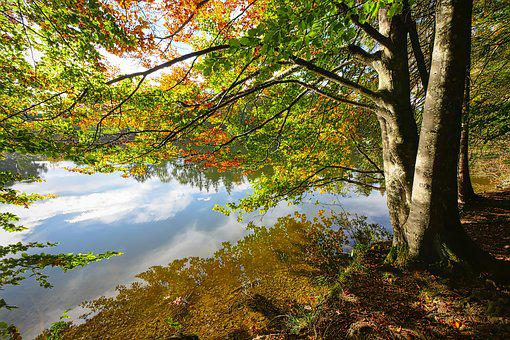Forest, Away, Leaves, Autumn, Bank, Nature, Tree, Mood