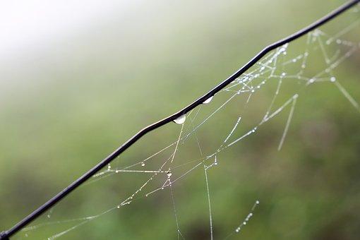 Morning, Spider Net, Cobweb, Branch, Sun Rays, Drops
