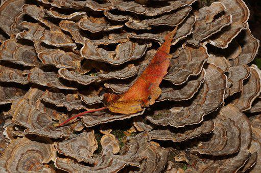 Fungus, Leaf, Nature, Woods, Autumn, Forest, Mushroom