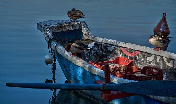 Lake, Boat, Nature, Blue, Ducks, Peace