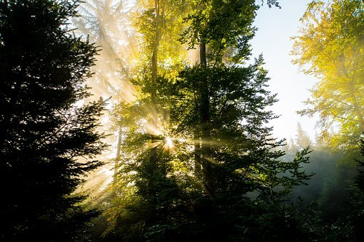 Forest, Autumn, Sunbeam, Nature