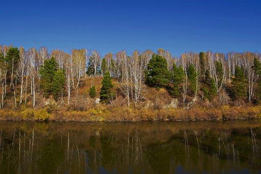 River, Forest, Nature, Landscape, Reflection