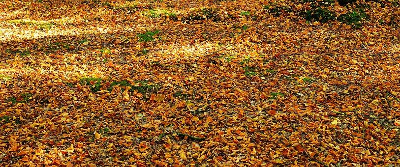 Forest, Forest Floor, Nature, Autumn, Mood, Landscape