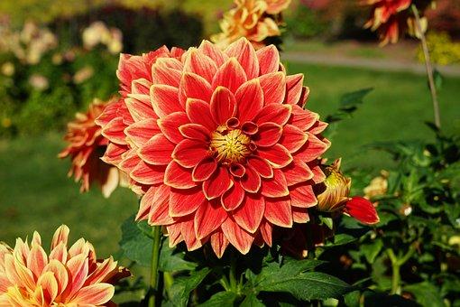 Flower, Park, Late Summer, Autumn, Macro, Nature, Plant