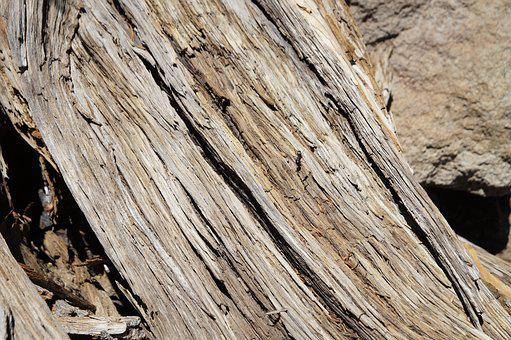 Wood, Structure, Grain, Nature, Tree, Tribe