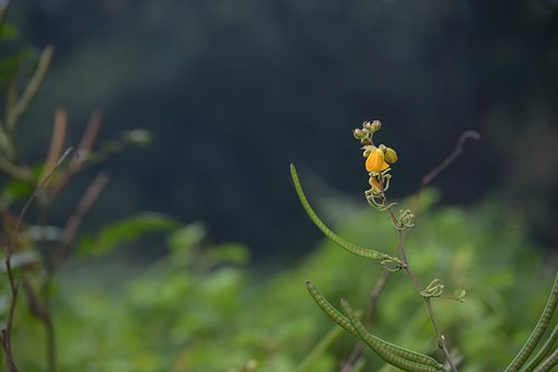 Flower, India, West Bengal, Fashion, New, Today